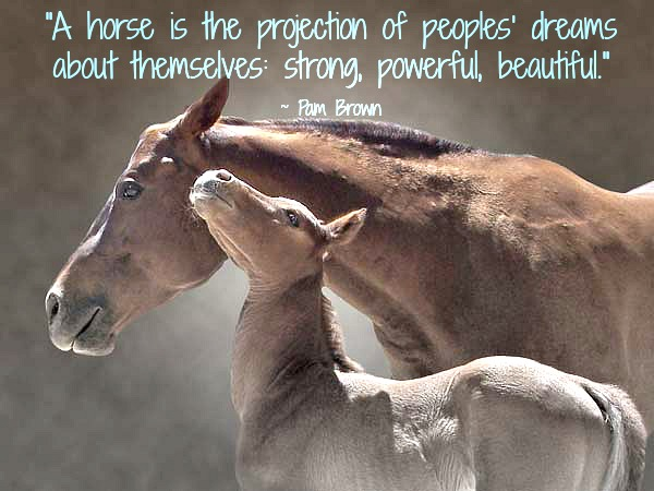 horse-quotes-day-of-the-horse