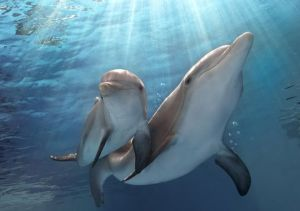 1410381680000-AP_FILM_REVIEW-DOLPHIN_TALE_2_67119068