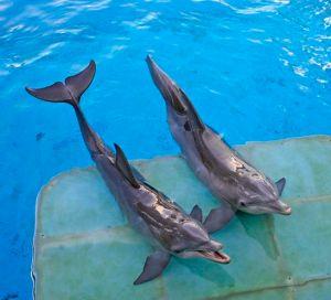 b4s_dolphin062013_10978242_8col