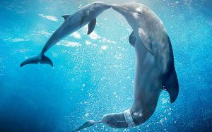 Dolphin-Tale-2-Wallpapers