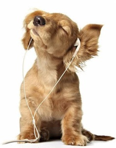 dog_listening_to_ipod