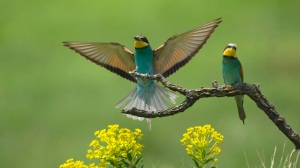 Best-top-desktop-birds-wallpapers-hd-bird-wallpaper-picture-image-photo-5