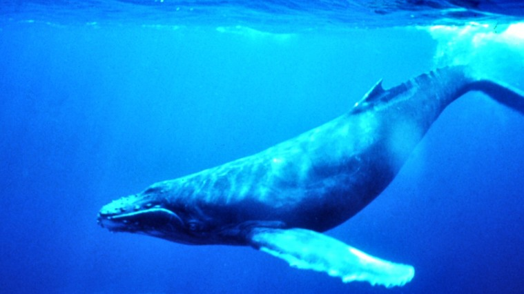 blue-whale-qed