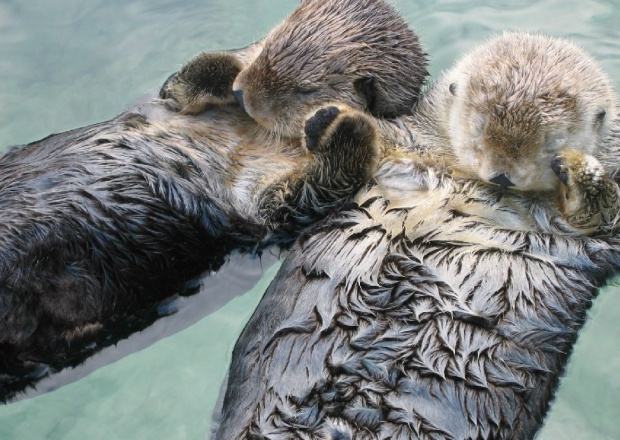 how to draw otters holding hands