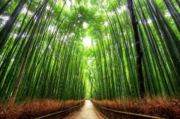 beautiful-trees-bamboo