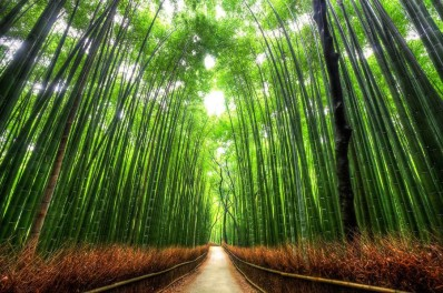 beautiful-trees-bamboo