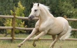 beautiful_animal-wide