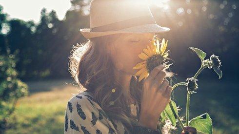 sunflower-feature