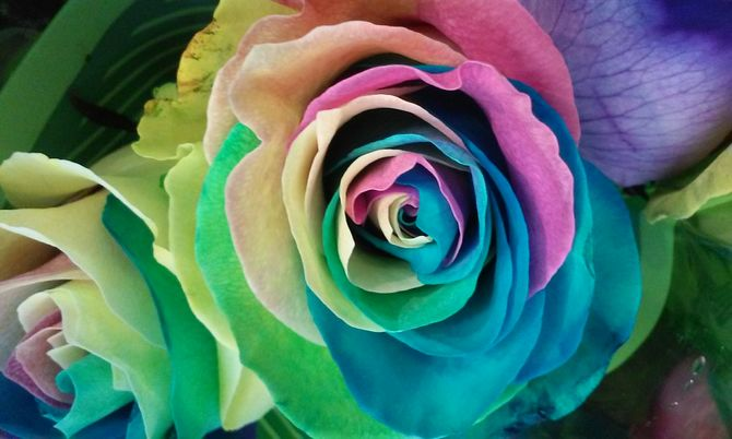 Magic the little things yourhappyplaceblog for How much are rainbow roses