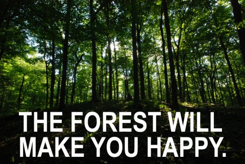 forest-trees-happy