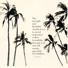 5d9a7cd687441d2405e18c7ec1005ccc--palm-trees-beach-quotes