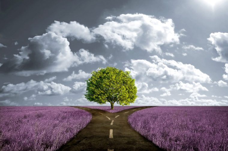 crossroad-path-in-lavender-meadow1